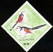 Long-tailed Tit Aegithalos caudatus