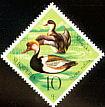 Red-crested Pochard Netta rufina