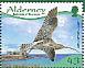 Eurasian Curlew Numenius arquata