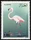 Greater Flamingo Phoenicopterus roseus  1987 Birds