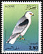 Black-winged Kite Elanus caeruleus  1987 Birds