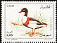 Common Shelduck Tadorna tadorna  1995 Birds