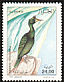 European Shag Phalacrocorax aristotelis  1998 Birds