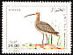 Eurasian Curlew Numenius arquata  2001 Birds