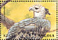 Harpy Eagle Harpia harpyja  2000 Animals of the world 6v sheet