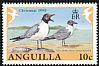 Laughing Gull Leucophaeus atricilla