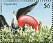 Magnificent Frigatebird Fregata magnificens