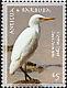 Western Cattle Egret Bubulcus ibis