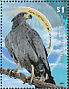 Crowned Solitary Eagle Harpyhaliaetus coronatus