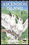 White Tern Gygis alba