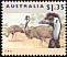 Emu Dromaius novaehollandiae