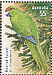 Norfolk Parakeet Cyanoramphus cookii