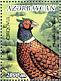 Common Pheasant Phasianus colchicus