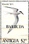 Roseate Tern Sterna dougallii  1980 Overprint BARBUDA on Antigua 1980.02