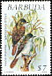 Lesser Antillean Flycatcher Myiarchus oberi