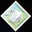 Mute Swan Cygnus olor  1994 Birds in the Red Book