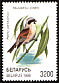 Eurasian Penduline Tit Remiz pendulinus  1998 Songbirds in the Red Book