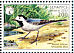 White Wagtail Motacilla alba  2002 BirdLife International Sheet