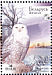 Snowy Owl Bubo scandiacus  2007 Owls BirdLife Sheet with 2 sets