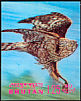 Northern Goshawk Accipiter gentilis  1969 Birds 3-D stamps