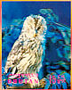 Tawny Owl Strix aluco  1969 Birds Sheet, 3-D stamps