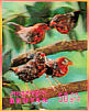 Red Avadavat Amandava amandava  1969 Birds Sheet, 3-D stamps