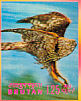 Northern Goshawk Accipiter gentilis  1969 Birds Sheet, 3-D stamps