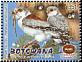 Pygmy Falcon Polihierax semitorquatus