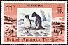 Adelie Penguin Pygoscelis adeliae