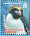 Macaroni Penguin Eudyptes chrysolophus  2008 Penguins of the Antarctic Sheet