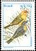 Saffron Finch Sicalis flaveola