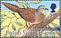 Barred Cuckoo-Dove Macropygia unchall