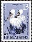 Dalmatian Pelican Pelecanus crispus