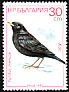 Common Blackbird Turdus merula