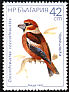 Hawfinch Coccothraustes coccothraustes  1987 Birds