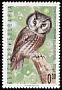 Boreal Owl Aegolius funereus