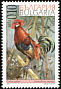 Red Junglefowl Gallus gallus
