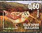 Eurasian Woodcock Scolopax rusticola