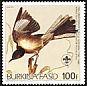 Northern Mockingbird Mimus polyglottos