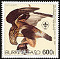 Rough-legged Buzzard Buteo lagopus