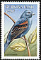 Blue Grosbeak Passerina caerulea