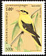 Black-naped Oriole Oriolus chinensis