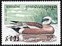 American Wigeon Anas americana