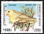 American Yellow Warbler Setophaga aestiva