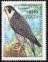 Peregrine Falcon Falco peregrinus
