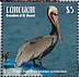 Brown Pelican Pelecanus occidentalis  2019 Brown Pelican Sheet
