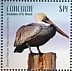 Brown Pelican Pelecanus occidentalis  2019 Brown Pelican