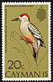 West Indian Woodpecker Melanerpes superciliaris  1974 Birds