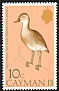 West Indian Whistling Duck Dendrocygna arborea  1975 Birds