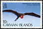 Magnificent Frigatebird Fregata magnificens  1986 Birds of the Cayman Islands